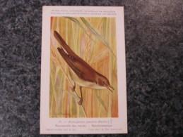 ROUSSEROLLE Marais  Musée Royal D´ Histoire Naturelle Belgique Oiseau Bird Oiseaux Illustration DUPOND H Carte Postale - Birds