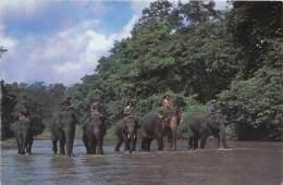 BF38592 The Yadanbon Zoological Garden Mandalay Elephant Elepahnt  Animaux - Elefantes