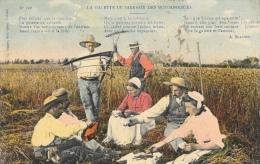 Travail Dans Les Champs - La Galette De Sarrasin Des Moissonneurs - Edition C. Jeanne - Cultures