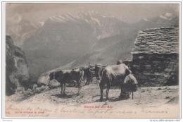 AK - Abends Auf Der Alp - Pontresina Schweiz 1906 - Viehzucht