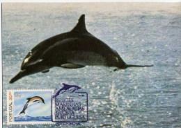 Portugal Madère Dauphin Dauphins Carte Maximum 1983 Madeira Dolphin Dophins Maxicard - Delfines