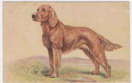 ILLUSTRATEUR  M.GEAR     BEAU CHIEN   -  / 1585A - Honden