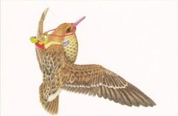 Carte Postale Matt FURIE Flight Of The Peace Frog 2007 - Andere Illustrators