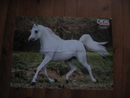 Lot De 2 Posters De Chevaux   Cheval Esta Esplanan, Pur Sang Arabe  ( Environ 55x40) - Afiches