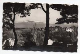Cpsm 84 - Carpentras - Vue Sur Le Mont Ventoux - (9x14 Cm) - Carpentras