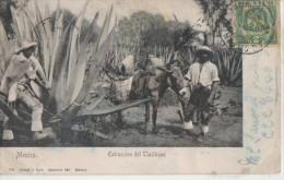 .MEXICO ( Extraction Del Tlachique ) - México