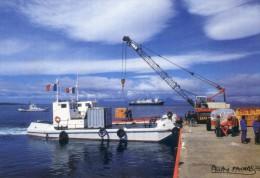 Lot De 6 Cartes - Terres Australes Et Antartiques - Photo De Fatras - Cormoran Kerguelen -Moutons - Renne - Albatros - TAAF : French Southern And Antarctic Lands