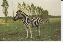 CPSM ZEBRES EN LIBERTE CHATEAU DE THOIRY YVELINES RESERVE AFRICAINE ZOO - Zebras