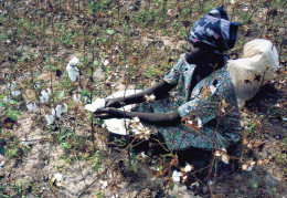 CPM   Tchad  r�colte du coton