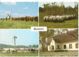 CPSM BUGAC CHEVAUX MOUTONS VACHES - Bulgarie