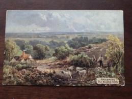 The Weald Of Surrey HASLEMERE ( Oilette 7103 ) Anno 19?? ( Zie Foto Voor Details ) !! - Surrey