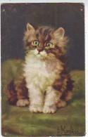 CHATON . CHAT Par D. MERLIN . FANTAISIES . ILLUSTRATEURS. N:166 - Katten