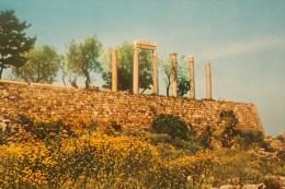 LIBAN -  LEBANON BYBLOS (JBEIL ) GRECO.ROMAN COLUMNS - Lebanon