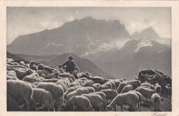 Un Troupeau De Moutons - HEIMAT -  Oblitérée BAHNPOST Le 12.11.1925 - Animaux & Faune