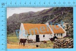 Cpa  ( In The Gap Of Dunloe Killarney ) Post Card Carte Postale Recto/verso - Kerry