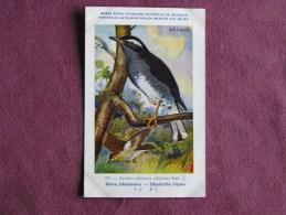 GRIVE SIBERIENNE  Musée Royal D´ Histoire Naturelle Belgique Oiseau Bird Oiseaux Illustration DUPOND H Carte Postale - Birds