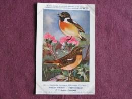 TRAQUET RUBICOLE  Musée Royal D´ Histoire Naturelle Belgique Oiseau Bird Oiseaux Illustration DUPOND H Carte Postale - Birds