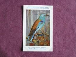ROLLIER D' EUROPE Musée Royal D´ Histoire Naturelle Belgique Oiseau Bird Oiseaux Illustration DUPOND H Carte Postale - Oiseaux