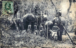 CEYLON - Elefants In Kraal, Tigerjagd, Orig.gel.Karte 1912, 3 C Marke - Sri Lanka (Ceylon)