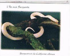 86 LA TRIMOUILLE  L ILE AUX SERPENTS   ROI DE CALIFORNIE ALBINOS   CP626 - La Trimouille