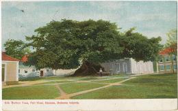 Bahamas Silk Cotton Tree, Full View Nassau Bahama  Edit Moore 259  Used Nassau 1909 - Bahamas