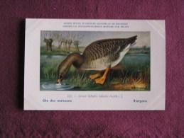 OIE DES MOISSONS Musée Royal D´ Histoire Naturelle Belgique Oiseau Bird Oiseaux Illustration DUPOND H Carte Postale - Vogels