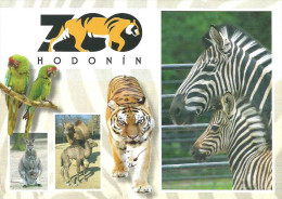 ANIMAL KANGAROO WALLABY ZEBRA CAMEL DROMEDARY TIGER GREEN MACAW PARROT LORY BIRD ZOO Hodonin Repress 66 * Czech Republic - Autres