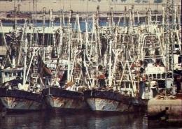Flotte De Crevettiers A Mina Al Ahmadi - Shrimp Boats At Mina Al Ahmadi - Formato Grande Non Viaggiata - Kuwait