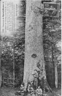 Environs De SAINT DIZIER : Le Chêne Du Champ Jean-Claude - Belle CPA Circulée En 1913 - Saint Dizier