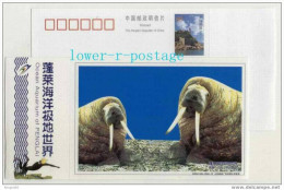 China 2005 Penglai Ocean Aquarium Postal Stationery Card Arctic Bering Sea Walrus - Other