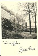 LA MUFFOLA  Biglietto Di Auguri - Dopo Il 1965