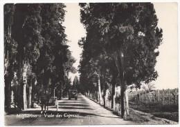Migliarino - Viale Dei Cipressi - Pisa - H1966 - Pisa
