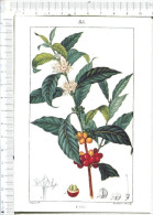 LE  CAFE   -      Chaumeton   - Flore Médicale   -   85 - Ohne Zuordnung
