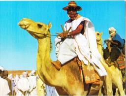 Algeria, Man Riding Camel, Unused Postcard [14598] - Men