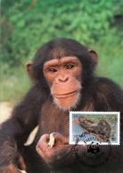 Sierra Leone Schimpanse WWF Karte Mit Sondermarke - Sierra Leone (1961-...)