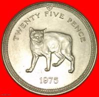 ★ Tailless Manx Cat★ ISLE OF MAN ★ 25 PENCE 1975 UNC! LOW START ★  NO RESERVE! - Monete Regionali