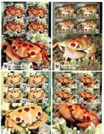 ait140301m Aitutaki 2014 WWF Spotted Reef Crab 4 m/s