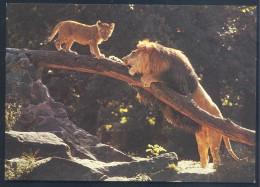 Germany Postcard: Fauna Lion Löwe Panthera Leo Zoologischer Garten Berlin - Katzen