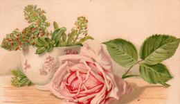 ROSES - Fleurs, Plantes & Arbres