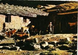 France, A L'heure De La Traite... Used Postcard [14619] - Farms