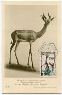 COTE DES SOMALIS CARTE MAXIMUM DU N°289 GAZELLE-GIRAFE  OBLITERATION 1-8-1958 OBOCK - Lettres & Documents