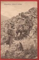 TMI2-14 Militär, Gebirgsartillerie, Artillerie De Montagne. Marche Dans Les Rochers. Maultiere, Mulets. Nicht Gelaufen - Non Classés