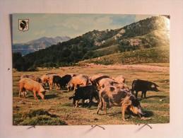 La Corse Pittoresque - Troupeau De Cochons - Unclassified