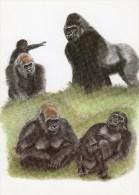 Postcard - Lowland Gorillas (Jambo, Nandi, Motaba, N'Pongo, Rafiki & Kishka) At Jersey Wildlife Preservation Trust. A - Monkeys