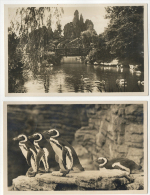 Hamburg, Carl Hagenbeck's Tierpark, 2 Stück: Südpoler-Panorama, Pengouins + Japanische Insel FOTOKARTE 1935 - Allemagne