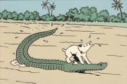 Thématiques Tintin Et Milou  Tintin Au Congo Alligator Ou Crocodile C'est Caïmans Pareil - Bandes Dessinées