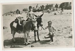 Scheveningen Scherpe Fotokaart 1953 Groeten Uit Beach Life With Children And Donkey - Scheveningen