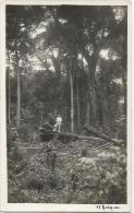 Equatorial Guinea 1920s Rio Muni el bosque forestry forest Agfa viewcard