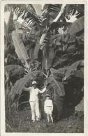 Equatorial Guinea 1920s Rio Muni colonial banano banana plantation agriculture Agfa viewcard