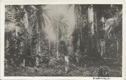 Equatorial Guinea 1920s Rio Muni Perbosque Agfa Viewcard - Guinea Equatoriale